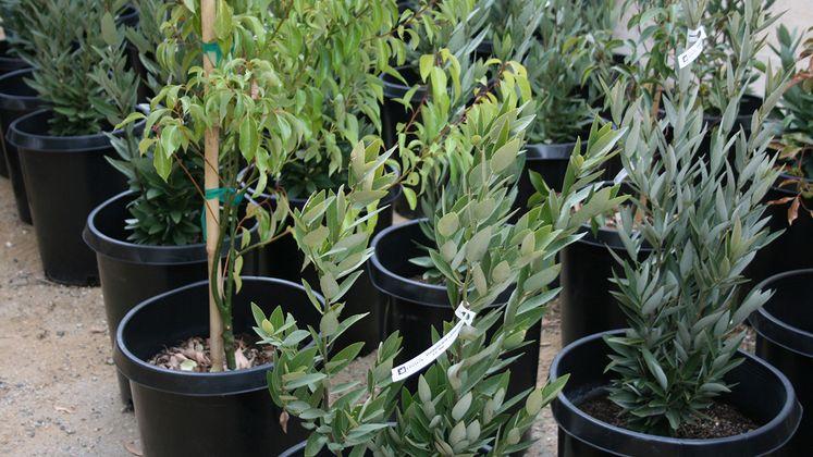 Monterey Park tree donations