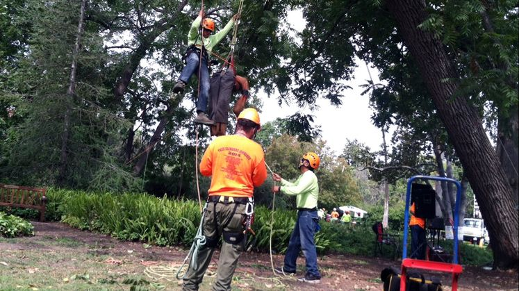 Helping to Increase Electrical Safety Awareness Among Spanish-Speaking Arborists