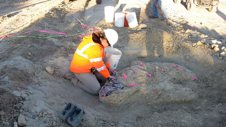 SCE Fossil Find to Get Its First Public Viewing