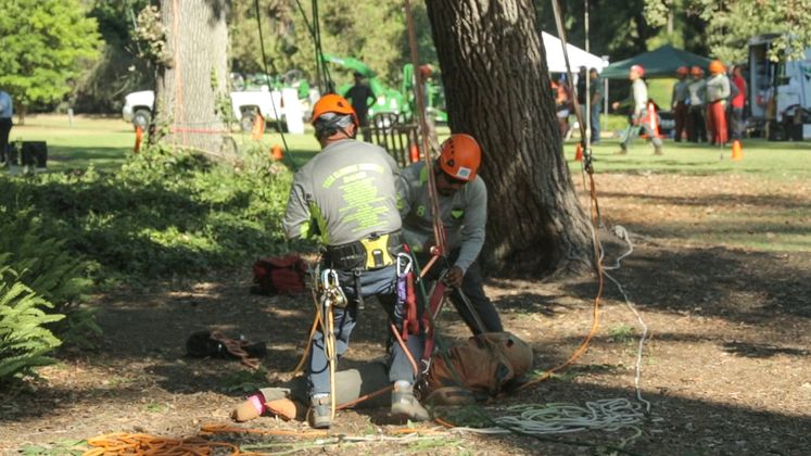 Tree Trimmer Safety