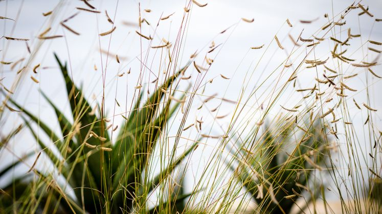 Huntington Beach Drought Tolerant Landscaping Project