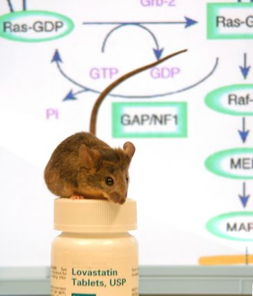 Statins helped reverse attention deficits in this mouse, which was bred to develop the leading genetic cause of learning disabilities.