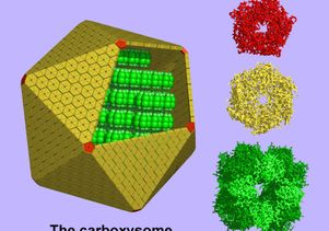 The carboxysome