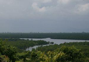 Mangroves in Kaphur Bay (southern Thailand)