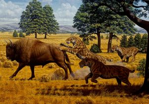 sabertooth cats and bison artwork