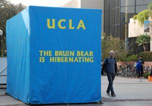Bruin Bear in hibernation