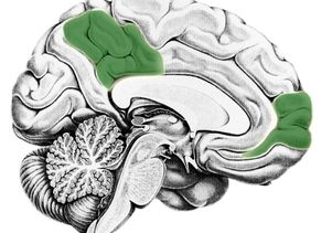 Medial prefrontal cortex | precuneus