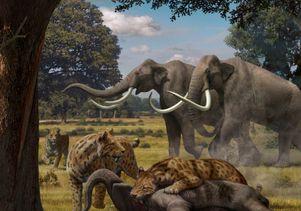 Sabertooth cat fighting woolly mammoth