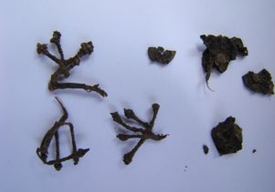 Grape stems and seeds