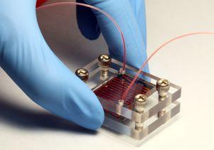 Nano-Velcro 1
