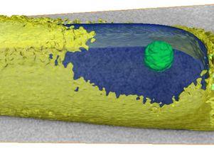 3-D reconstruction of M. hungatei
