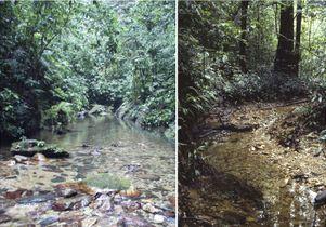Guppy habitats in northern Trinidad