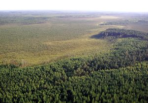 Siberian forest and peatland by Dave Beilman