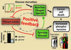 Glucose feedback loop