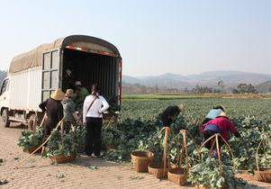 Farmers load produce for market
