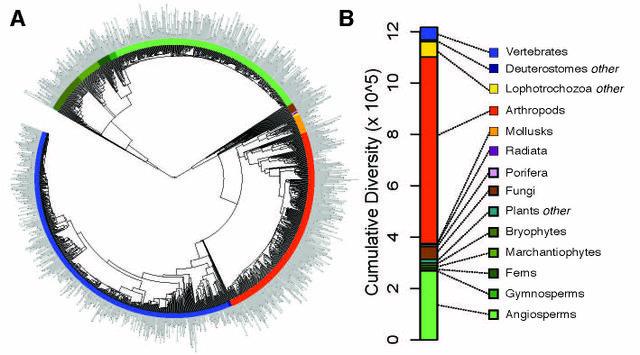 Diversity tree of 1,397 major groups of eukaryotes