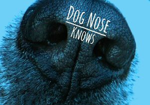'Dog Nose Knows'