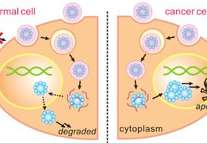 Nano-capsules and cancer