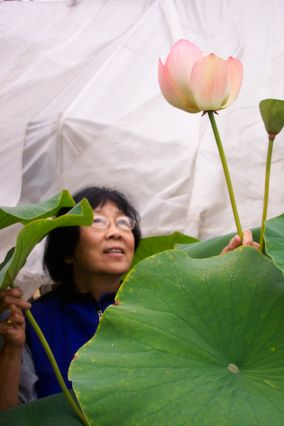 Jane Shen-Miller with Nelumbo nucifera, the 'sacred lotus'
