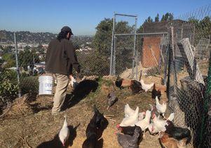 Urban agriculture in L.A.