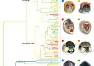 10 species of primates