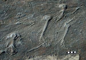 Rangeomorph fossils