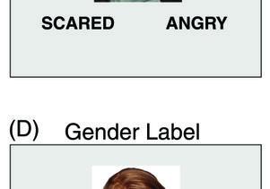 Gender cards