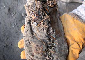 armenian shoe 1