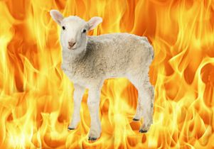 the-fire-sheep