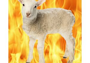 the-fire-sheep-toc