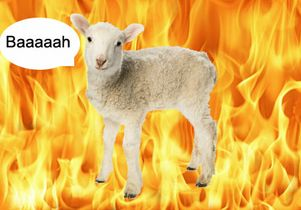 the-fire-sheep-talks