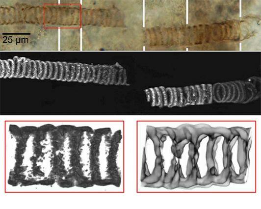 Ancient Fossil-prv