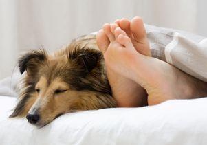 sleeping dog on bed