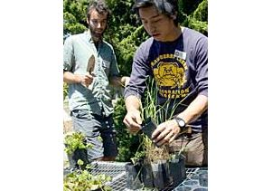uc berk students plant seedlings