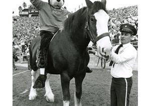 Joe-Bruin-on-horse-250