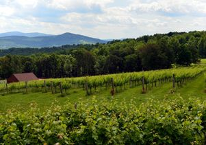 mountain-vineyard-adj