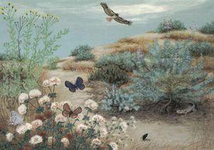 Sharon Belkin.dunes-1