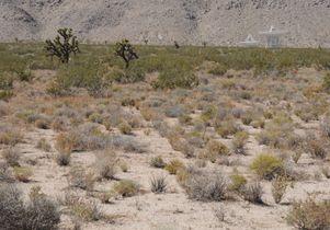 LMMV habitat w Joshua dish