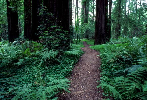 Opinion Bold Steps Needed To Bring California Parks Up To