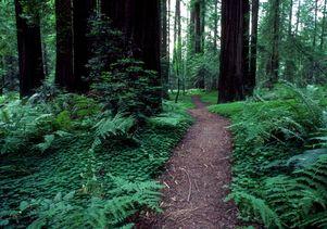 Redwoods Parks