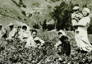 Japanese immigrants in agricultural field