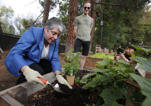Janet Napolitano plants oregano