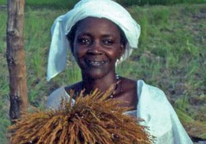 African rice photo