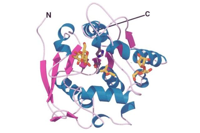 Antigen 85B structure