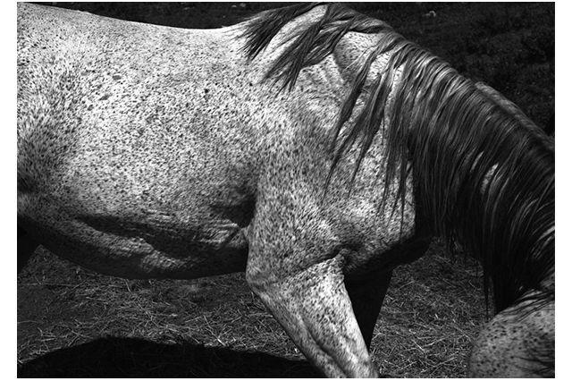 Whitney Hubbs - Horse