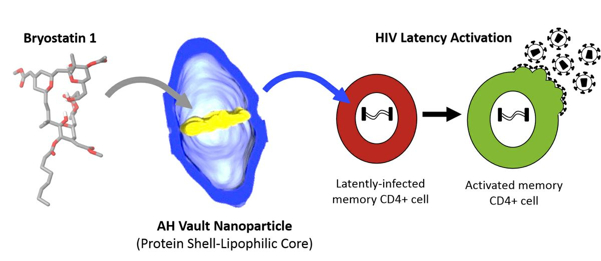 Vault Nanoparticles Engineered At Ucla Show Promise For