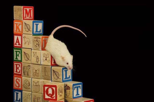 Mouse on blocks
