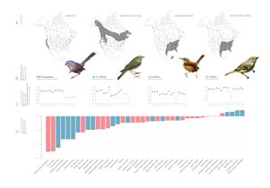 bird-map-graphic