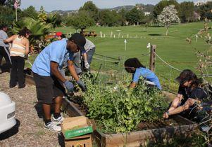 Bruin staff gardening at V.A.