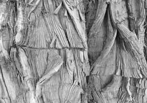 """Tree detail from """"52"""""""